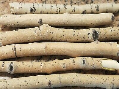 - 6 Natural Aspen Wood Chew Sticks Twigs For Rabbits