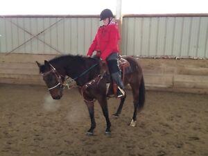 Barrel prospect / ranch horse Mare