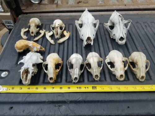 Animal Skulls LOT
