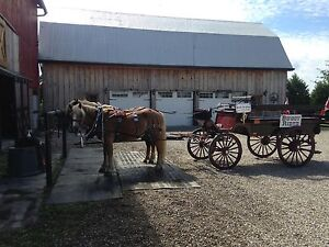 Working Hobby farm tours- Back-N-Time Horse Drawn Carriages Windsor Region Ontario image 4