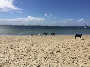 Looking for Sydney based dog meet ups? Cronulla Sutherland Area Preview