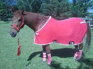 ensemble rouge (couverture 78po, licou, , leadchain, bandages)