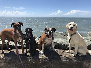 Dog Walking and Adventures Stafford Heights Brisbane North West Preview