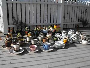 Cup and saucer garden pots Exeter West Tamar Preview