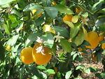 Citrus Springs Vintage