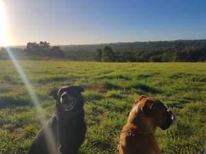 Pet Minding, House Minding and Dog Walking in the Inner West