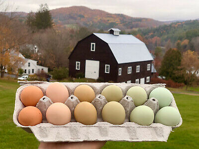 6 Rainbow Chicken Hatching Eggs Rare And Heritage Breeds Fresh And Fertile