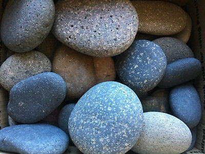 20+lbs of Tumbled Beach Stones for Painting from the Sandy Shores of San Diego