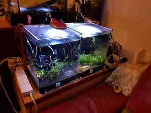 shrimp tanks Penshurst Hurstville Area Preview