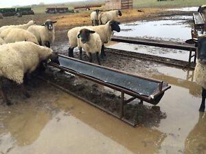 Sheep grain/feed troughs
