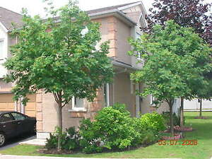 Amazing location!! Cawthra/Lakeshore 3 Bdrm Townhouse for Rent