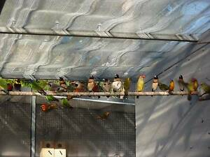 Finches from $25 Tallebudgera Gold Coast South Preview