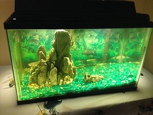 FISH TANK FOR SALE everything included