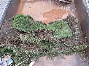 Sir walter soft leaf bufallo roll on lawn High Wycombe Kalamunda Area Preview