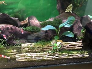 anubias kijiji in ontario buy sell save with canada s 1