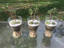 Decorative Succulent Vases Montrose Glenorchy Area Preview