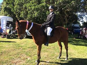 Project horse for sale Gilston Gold Coast West Preview