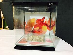 SMALL MARINA TANK $5 Cloverdale Belmont Area Preview