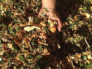 ❌FREE DELIVERY WOOD CHIPS/ MULCH❌ Rossmore Liverpool Area Preview