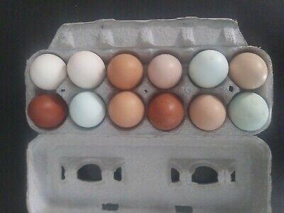 1 Dz Barnyard Mix Fertile Chicken Hatching Eggs