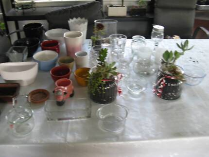 PLANTS & CONTAINERS - MAKE YOUR OWN XMAS GIFT Sun 17/12/17