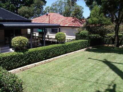 Hedging Experts Ryde Ryde Area Preview