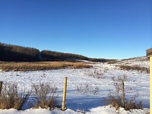 Amazing Hunting/Pasture land for sale