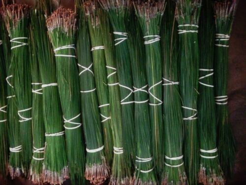 "alabama long leaf pine needles   10lbs  green   14 to 17"""