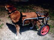 Dog Mobility Cart Earlville Cairns City Preview