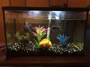 10 gallon fish tank and ALL accessories included plus fish