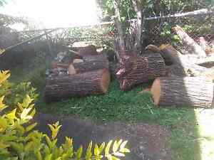Firewood cheap Coopers Plains Brisbane South West Preview