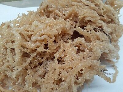 Raw Irish Moss Sea Moss 3lb  Raw WildCrafted Caribbean Superfood-48 Oz