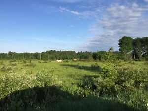 Farm land and house for sale