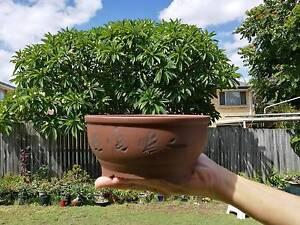 Yixing clay Bonsai Pot Macgregor Brisbane South West Preview