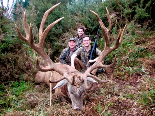 New Zealand Red Stag Hunt