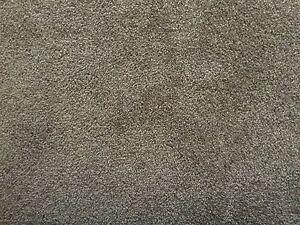 100% pure NZ wool brown carpet Hampton Bayside Area Preview