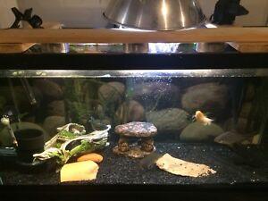 45 gallon complete aquarium