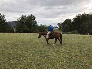 Unregistered Quiet Quarter Horse Bridgman Singleton Area Preview