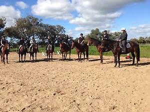 Horse Riding Lessons Baldivis Baldivis Rockingham Area Preview