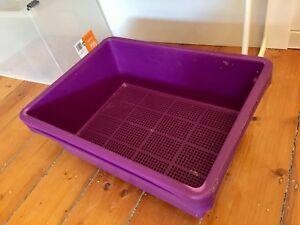 Purple cat kitten litter tray