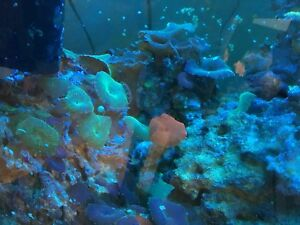40lbs Roches et Coraux +extras / Corals + Rocks with extras