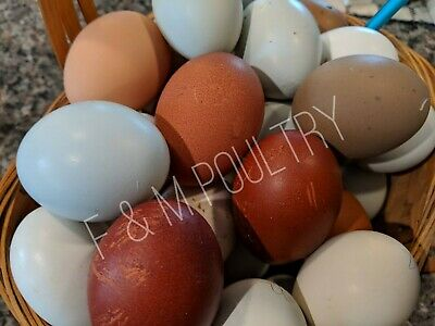 10 Hens Choice Assorted Fertile Chicken Hatching Eggs Npip