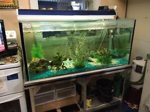 Fish Tank 4x2x2 Clontarf Redcliffe Area Preview
