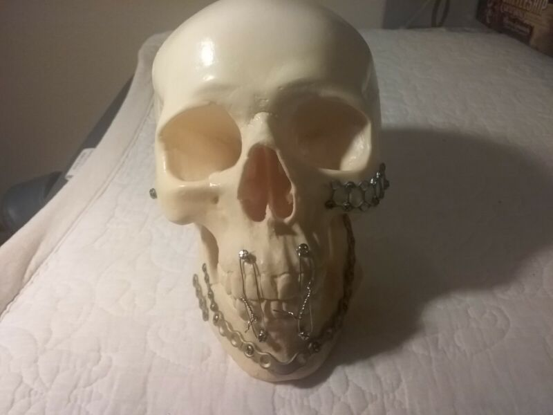 Vintage Skull Medical School Study Prop