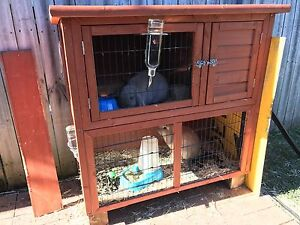 lop eared rabbits Woonona Wollongong Area Preview