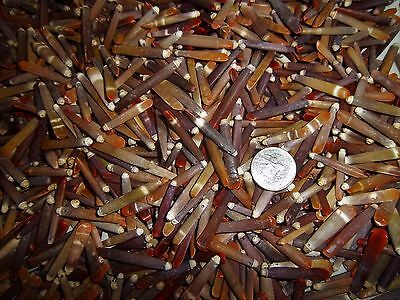 Lot Of 100 Colorful Small Sea Urchin Spine Quill With A Drilled Hole For Crafts