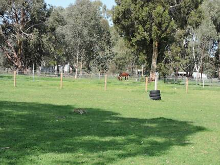AGISTMENT DARLING DOWNS