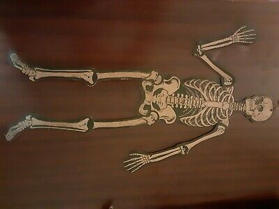 "Vintage ~23"" Cardboard Paper Halloween Jointed Skeleton Decoration LUHRS US"