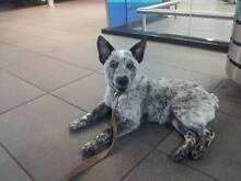 Zed N' DiGi Dog Walking Rockhampton Rockhampton City Preview