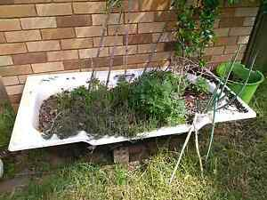 FREE  steel bath tub / garden planter.  Garden bed. Raised garden Northmead Parramatta Area Preview